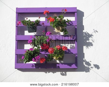 Flower pots on purple Painted wooden pallet in Village Andalusia - Spain