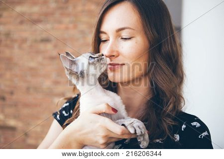 Happy woman is holding her adorable Devon Rex cat. Close-up of a beautiful young woman holding cute kitten. Profile of a beautiful cat with blue eyes. Orange background.