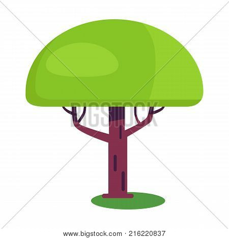Baobab short tree with an enormously thick trunk and green leaves vector iisolated on white. Exotic plant flat design cartoon style with branches