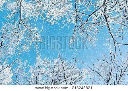 Winter background. Frosty branches of the winter trees against blue sky -forest winter landscape scene. Snowy treetops of winter trees in the sunny winter forest. Sunny winter landscape. Snowy winter forest