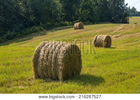Hay bale. Agriculture field. Rural nature in the farm land. Straw on the meadow. Grain crop, harvesting.