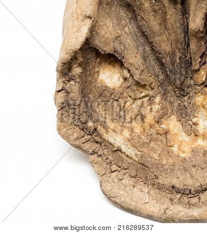 old horse's hoof on a white background .