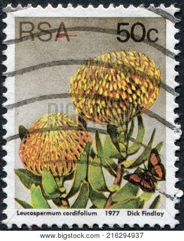 SOUTH AFRICA - CIRCA 1977: A stamp printed in South Africa (RSA), a flower bush Leucospermum cordifolium, circa 1977