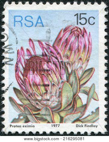 SOUTH AFRICA - CIRCA 1977: A stamp printed in South Africa (RSA), a flower bush Protea eximia, circa 1977
