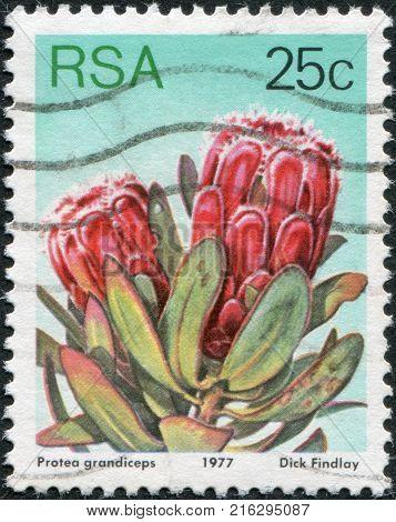 SOUTH AFRICA - CIRCA 1977: A stamp printed in South Africa (RSA), a flower bush Protea grandiceps, circa 1977