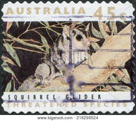 AUSTRALIA - CIRCA 1992: A stamp printed in Australia, shows the Squirrel Glider (Petaurus norfolcensis), circa 1992