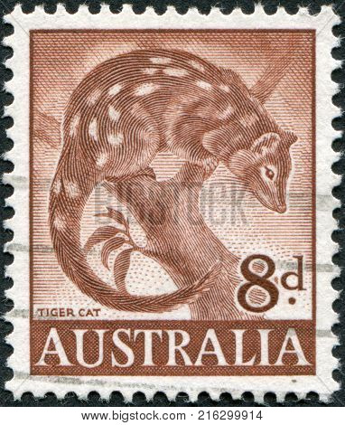 AUSTRALIA - CIRCA 1959: A stamp printed in Australia, shows Tiger Quoll (Dasyurus maculatus), circa 1959