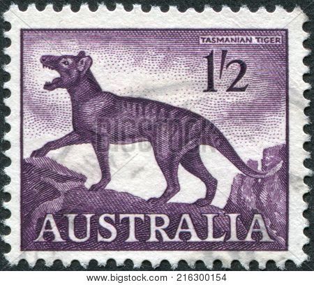 AUSTRALIA-CIRCA 1961: A stamp printed in Australia, shows a Tasmanian tiger (Thylacinus cynocephalus), circa 1961