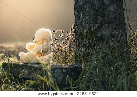 Teddy bear alone on a bench - Cute plush bear toy sitting on an old wooden bench at the base of a tree alone under the light of the morning sun.