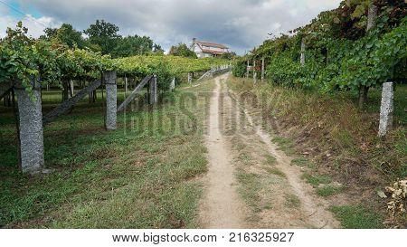 Pilgrim trail between Pontevedra and Caldas de Reis on the Camino de Santiago trail, Galicia, Spain