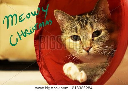 Cute house Cat hiding saying meowy Christmas