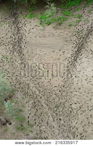 Footprints in the sand on the bank of the Irtysh River Omsk region Siberia Russia
