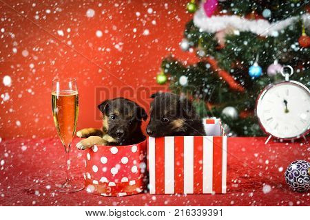 Dog Year, Pet On Red Background.
