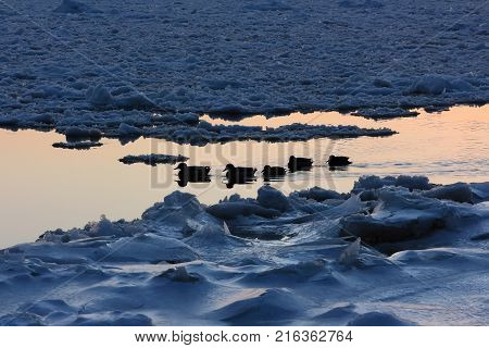 Ducks in winter. Ducks swimming among ice in a winter pond. Sunset moment.