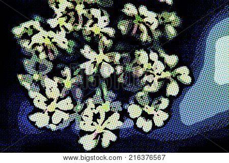 Sambucus (elder or elderberry) in Springtime. Background for web site or mobile devices
