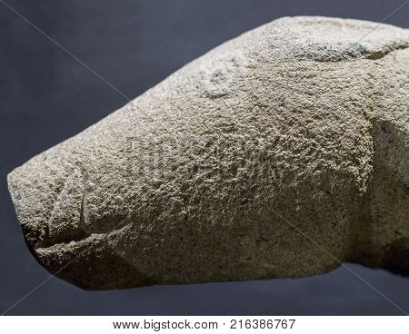 Madrigalejo Verraco head. Megalithic sculpture of boar made by Vettones on 4th century BC Madrigalejo Caceres Spain