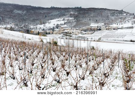 A vineyard parcel of Beaujolais surmounted by a village under snow France