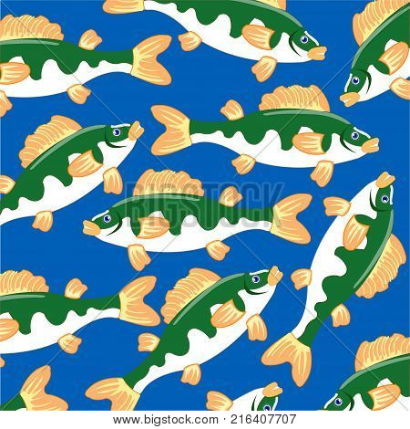 Freshwater fish perch on turn blue background is insulated
