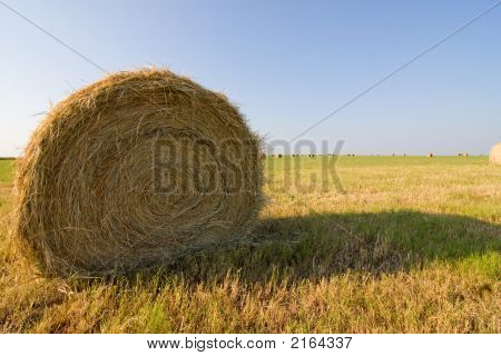 What The Hay?