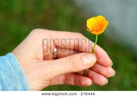 Gifve_an_orange_flower2