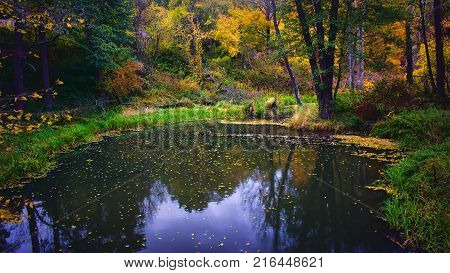 autumns forest on a swamp and river