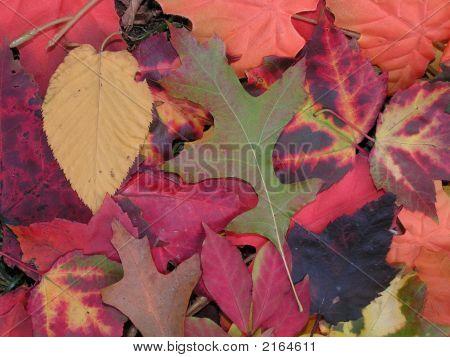 Fall Autumn Color Leaves 2