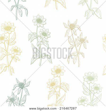 Bidens flower graphic color seamless pattern sketch illustration vector