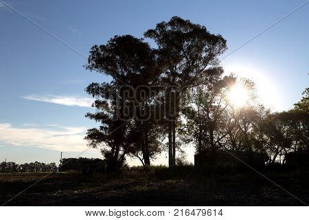Countryside landscape. The sunset in the farm, the sunlight beams go through a big tree. The vegetation and trees at backlight.