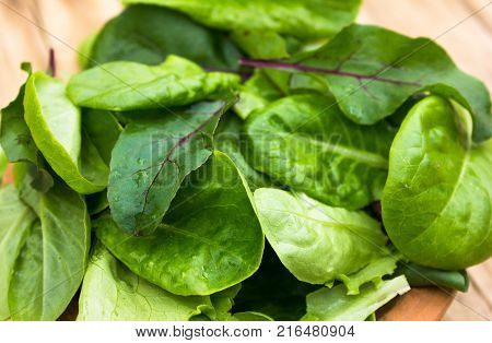 Fresh green lettuce salad leaves and beet leaves closeup. Vegetable salad lettuce.
