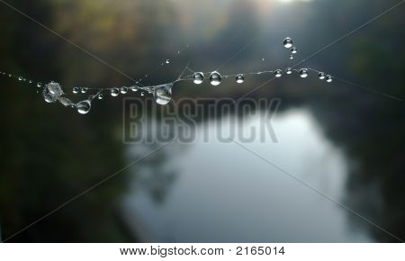 Dew Drops Caught In The Web