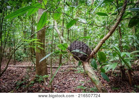 Wide angle of termite mound on tree trunk in the forest