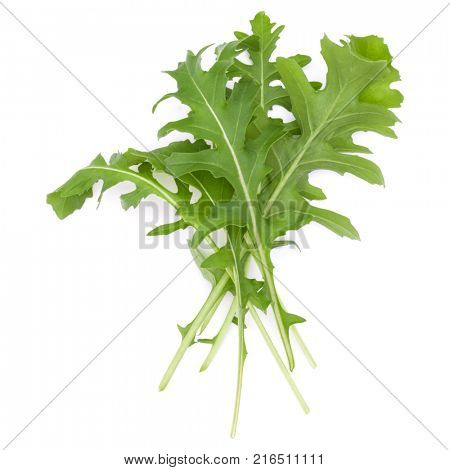Close up studio shot of green fresh rucola leaves isolated on white background. Rocket salad or arugula.