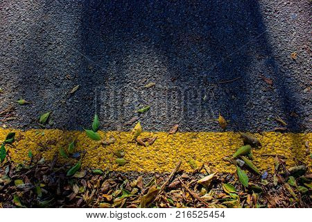 Yellow line. Yellow line, fallen leaves and shadow.