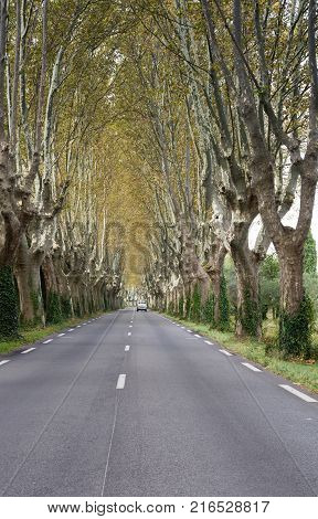 A country road with dashed white center line that is lined with plane trees showing autumn colors. A single vehicle is on the road.