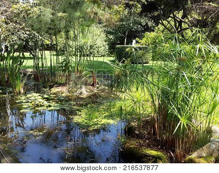 Pond with trees and aquatic plants in a sunny day