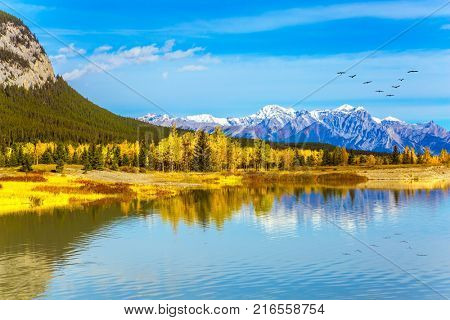 Concept of ecological and active tourism. Flock of migratory birds fly over the Rocky Mountains.  Mountains are reflected in the smooth turquoise water of the Abraham lake