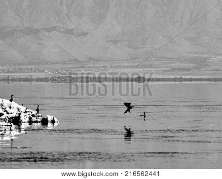 Birds on shore and in water, lake Skadar in Montenegro