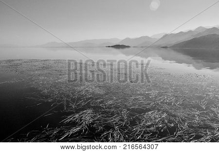 Grass on the surface of lake Skadar in Montenegro