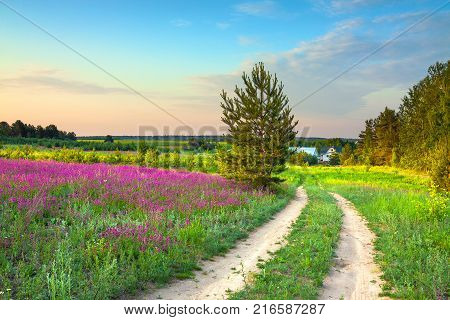 summer rural landscape with a blossoming meadow road and a farm. spring wild flowers on a field. purple flowers on a meadow and sunset. flowering field wildflowers and farmhouse on sunrise.