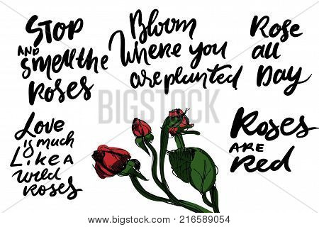 Stop and smell the roses. Rose al day. Roses are red. Life is much like a wild roses. Hand lettering quote for your design.Vector illustration