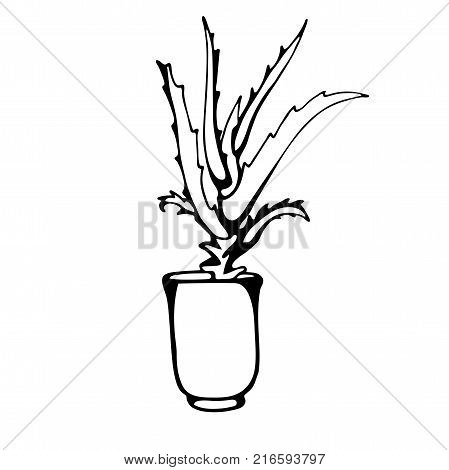Live Sketch Of House Plants In Pots. Vector Image In Style Painted By Hands.
