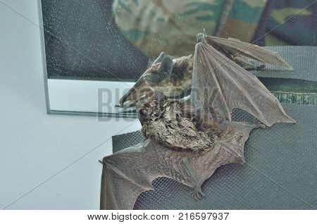A close up of the small bat before mirror.