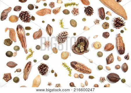 Traditional Christmas card background image. Pine cones berries seeds and nuts. Selection of festive Victorian forest decorations isolated on white background for cutting out individually or as card image etc.