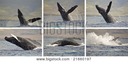 Whale photo sequence