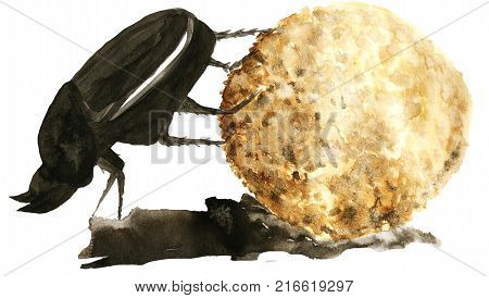 scarab bug with a ball watercolor isolated on white background. scarabaeus or dung-beetle african bug