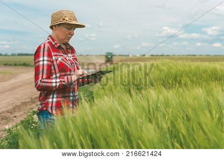 Responsible smart farming using modern technology in agricultural activity female farmer agronomist with digital tablet computer using mobile app in wheat crops field tractor in background