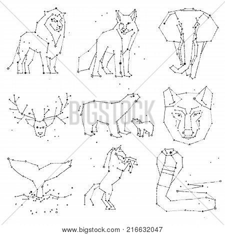 Collection of hand draw animals constellation on dark sky. Sketched wild animals with line and stars, horoscope style. Doodle constellation animals for cards, elephant, owl, wolf and other wild animals, vector art hand-draw illustration