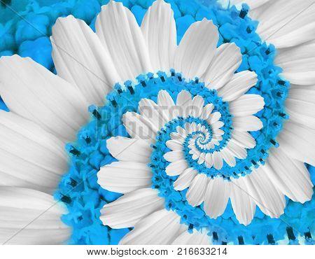 White blue flower swirl camomile daisy kosmeya flower spiral abstract fractal effect pattern fractal background. Twisted blue pastel flower spiral twirl. Distorted surreal flower floral background