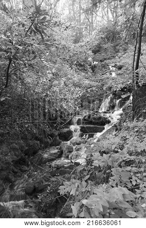 Sheffield, UK - Jan 2015: Tinker Brook passes throught the ancient woodland of Glen Howe park on 18 Jan 2015 near Wharncliffe Side