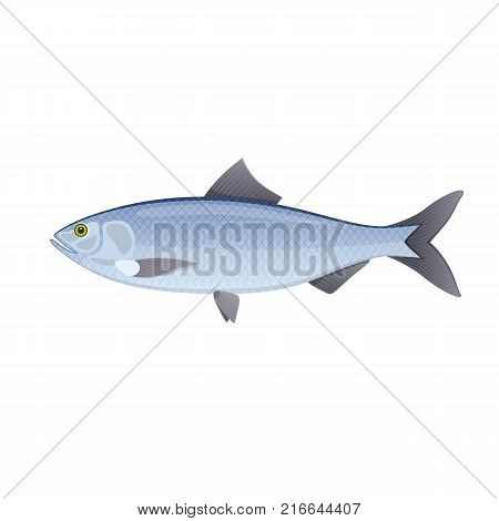 Herring. Colorful sea and river fish, swimming on the blue deep sea bottom. Ingredient for cooking, tasty food. Eating, delicious menu, market fish to around the world. Vector flat illustration.